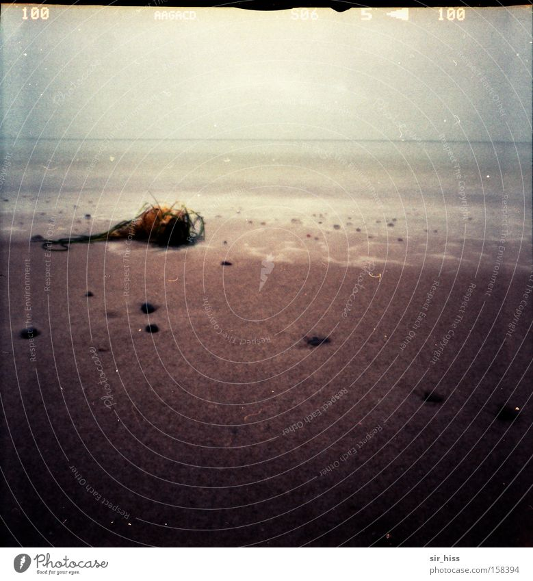flotsam and jetsam Baltic Sea Beach Ocean Waves Flotsam and jetsam Sand Algae Mussel Darss Lomography Winter Water