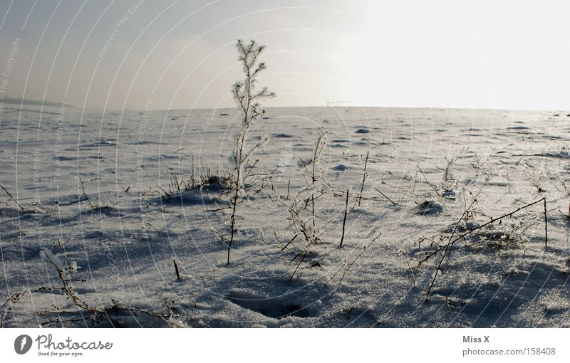 ice desert Colour photo Exterior shot Winter Ice Frost Grass Desert Freeze Cold Gloomy Frozen Frostwork Sparse Badlands Siberia frosty Snow Day