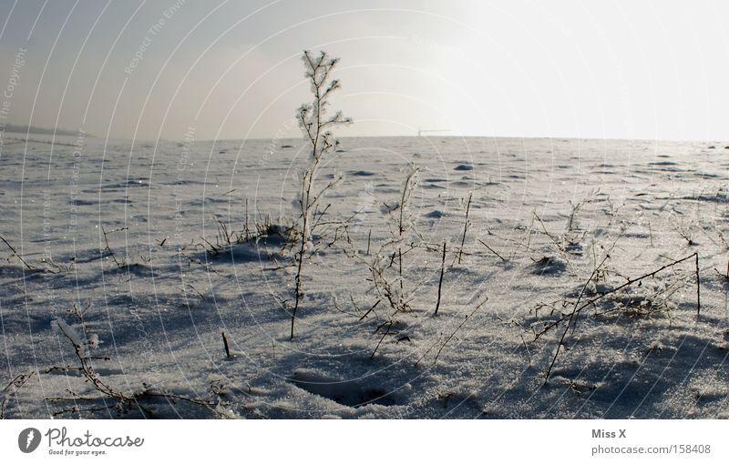 Winter Cold Snow Grass Ice Russia Gloomy Frost Desert Frozen Freeze Badlands Siberia Frostwork Desert Sparse