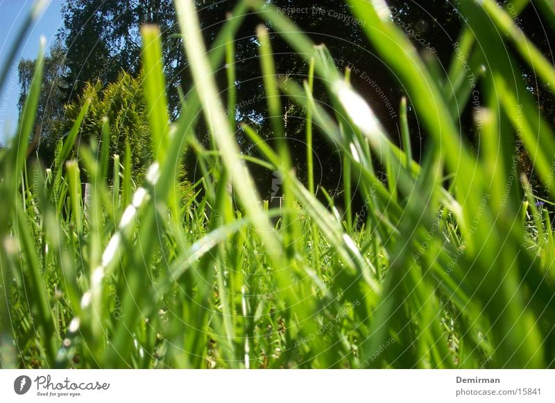 ant's view Ant Grass Summer Animal Bright