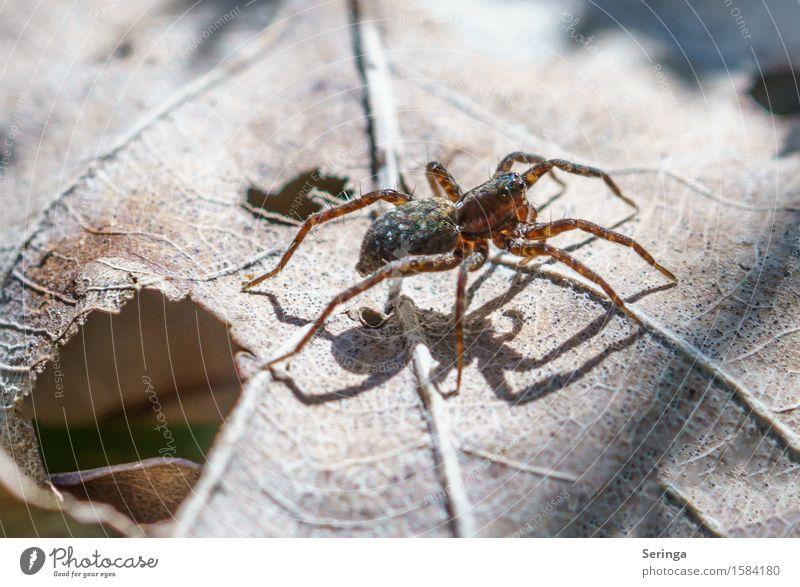 Nature Plant Flower Leaf Animal Forest Spring Meadow Garden Park Wild animal Bushes Crawl Spider Jumping spider