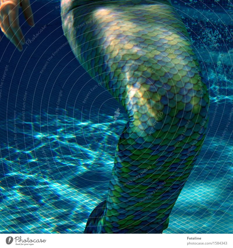 Neither fish nor meat? Human being Feminine Child Girl Young woman Youth (Young adults) Infancy 1 Elements Water Summer Near Wet Thin Blue Green Mermaid