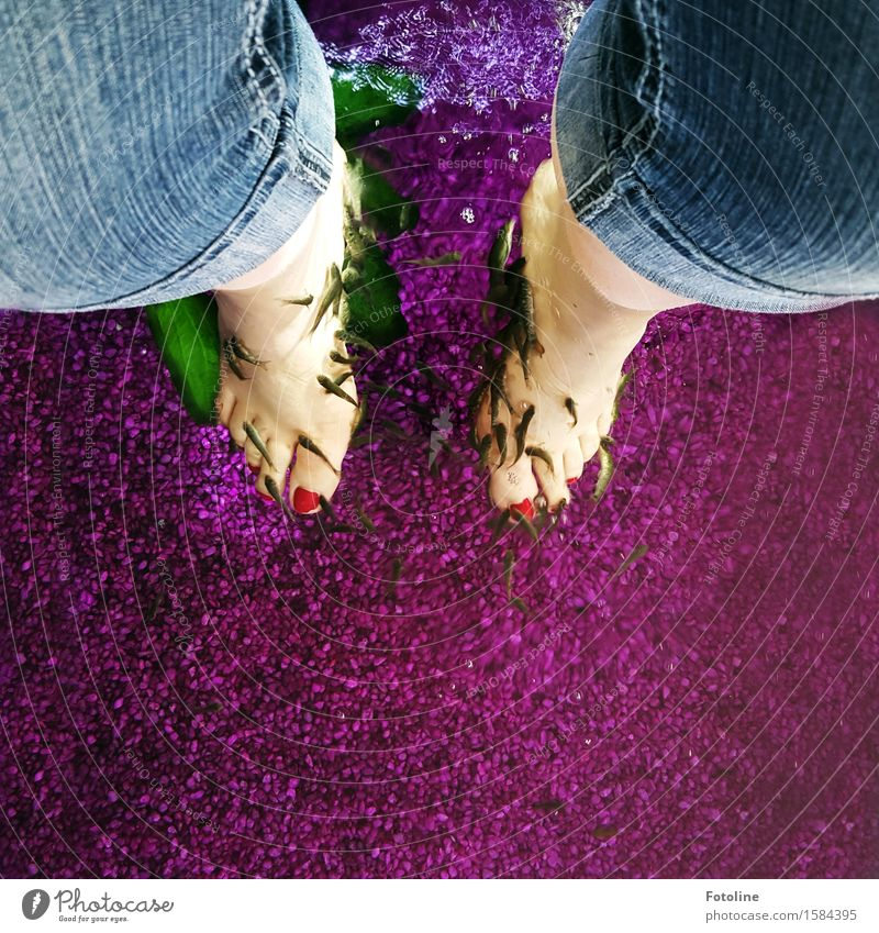 It's served Human being Feminine Legs Feet Animal Elements Water Farm animal Fish Flock Blue Pink Red Foot bath Pedicure Relaxation Wellness Colour photo