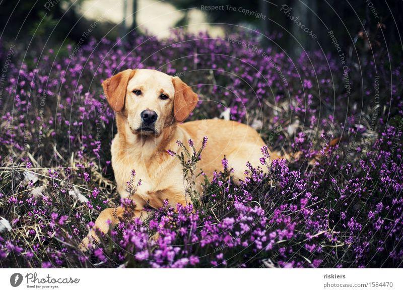 Dog Nature Plant Beautiful Animal Forest Baby animal Environment Spring Natural Friendship Lie Fresh Elegant Free Blonde