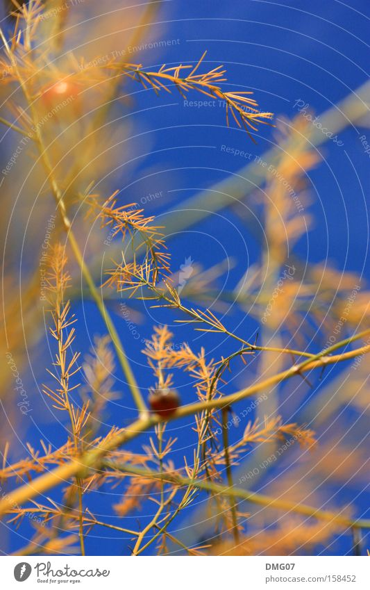 Nature Blue Plant Summer Red Flower Calm Winter Yellow Autumn Spring Weather Orange Wind Orange Gold