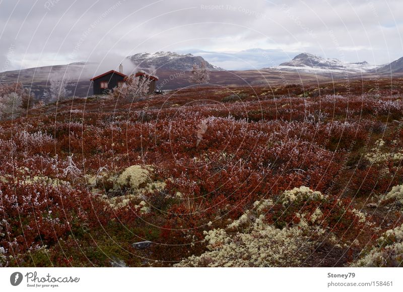 Morning frost in Rondane Calm Mountain House (Residential Structure) Nature Landscape Sky Clouds Autumn Ice Frost Bushes Moss Hut Cold Loneliness Freedom Norway