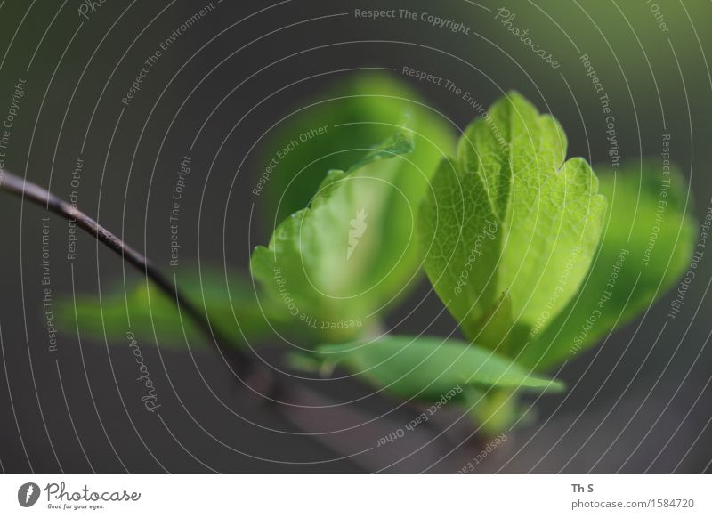 Nature Plant Green Leaf Calm Spring Natural Gray Brown Fresh Elegant Idyll Authentic Esthetic Blossoming Uniqueness