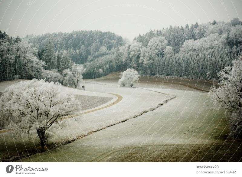 Tree Green Winter Forest Snow Meadow Landscape Germany Driving Hoar frost Train travel Confectioner`s sugar