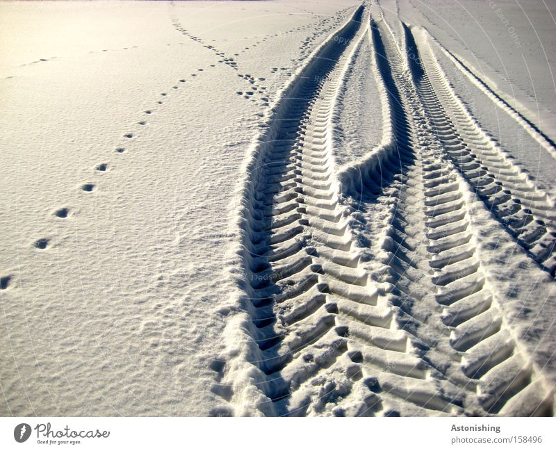 Photo number 100 leaves its mark Winter Snow Weather Ice Frost Lanes & trails Vehicle Animal tracks Cold White Tracks Snow track Light Shadow Skid marks
