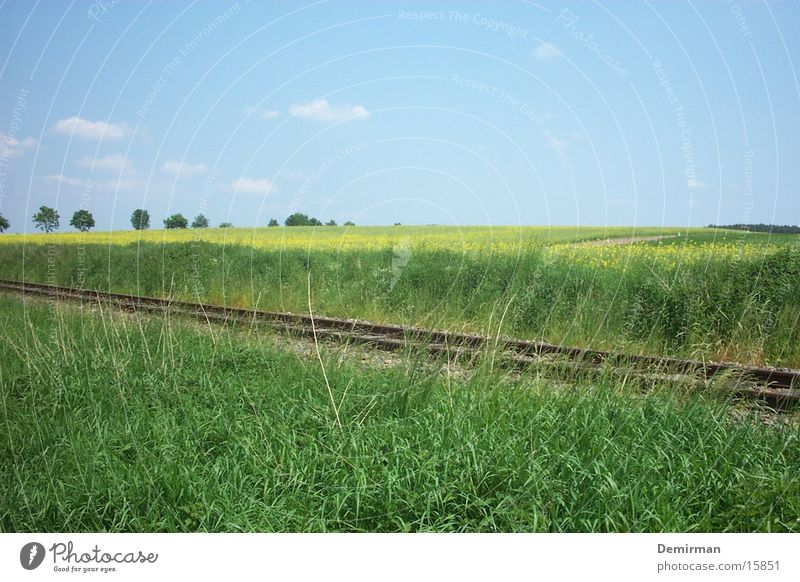 Sky Green Summer Field Transport Railroad Railroad tracks Traffic infrastructure Canola