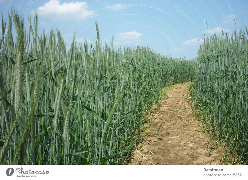 Lanes & trails Field Bushes Americas Hallway Wheat Forest path
