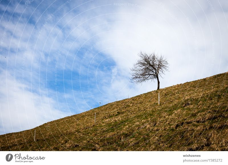 Against All Odds Harmonious Well-being Relaxation Meditation Trip Freedom Environment Nature Landscape Plant Earth Sky Clouds Spring Autumn Climate