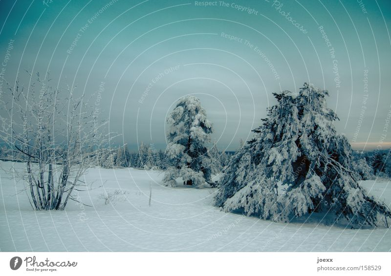 Nature Winter Clouds Cold Snow Ice Frost Thin Branch Long Fir tree Clearing Sky blue Winter mood