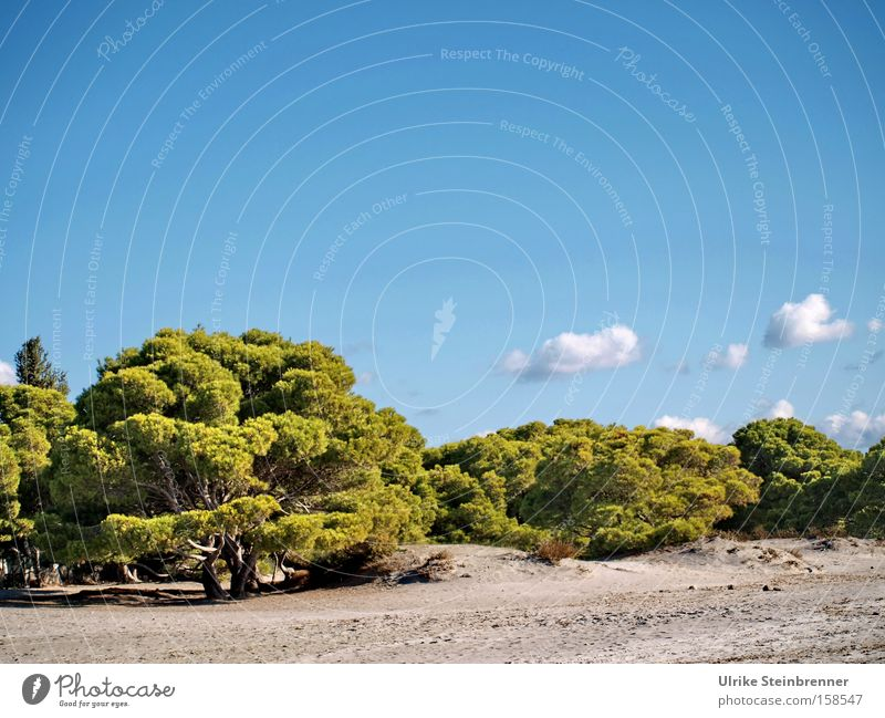 Nature Sky White Tree Green Blue Summer Beach Vacation & Travel Calm Clouds Loneliness Relaxation Sand Landscape Brown