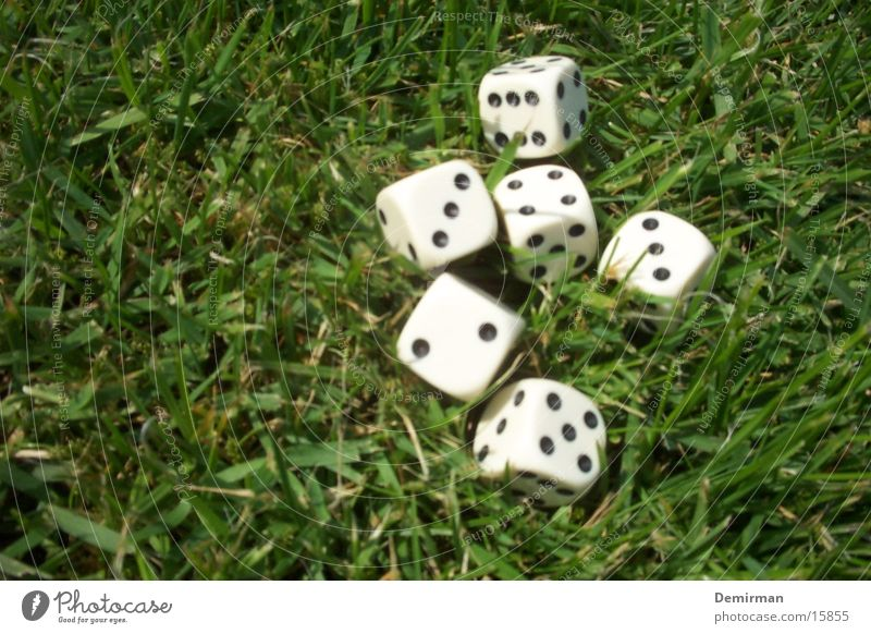 Cubes in the grass Grass Playing Kniffel Leisure and hobbies Digits and numbers Joy fun Calculation game Dice