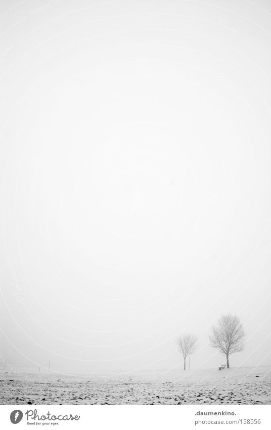 friends Relationship Fog Tree Branch Landscape Winter Empty Black & white photo Snow Earth