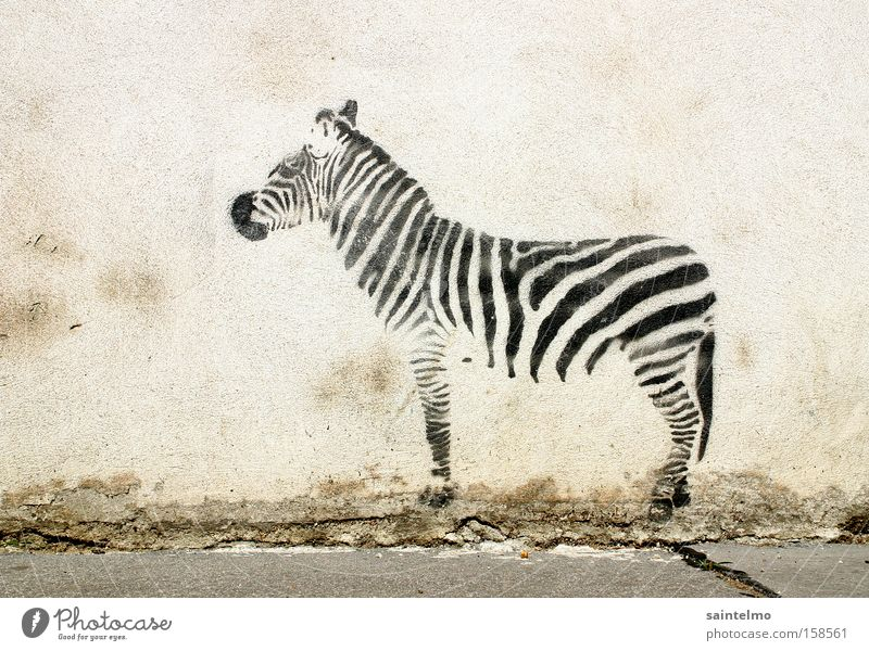 Animal Wall (building) Wall (barrier) Graffiti Art Road traffic Culture Stripe Life Living thing Painting and drawing (object) Creativity Street art Deception Zebra Illusion