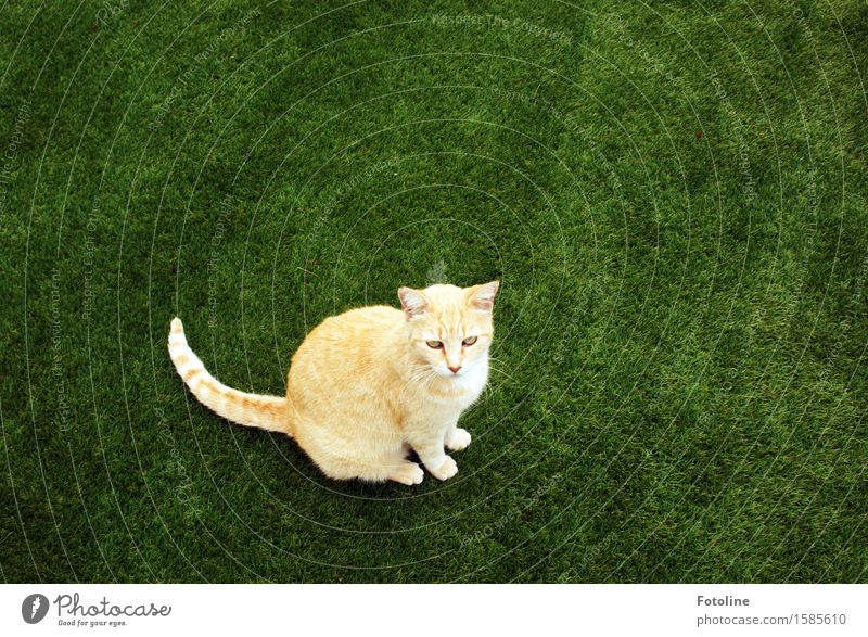 Oops, discovered! Environment Nature Plant Animal Grass Garden Meadow Pet Cat Animal face Pelt 1 Free Beautiful Near Natural Curiosity Green Orange Sit