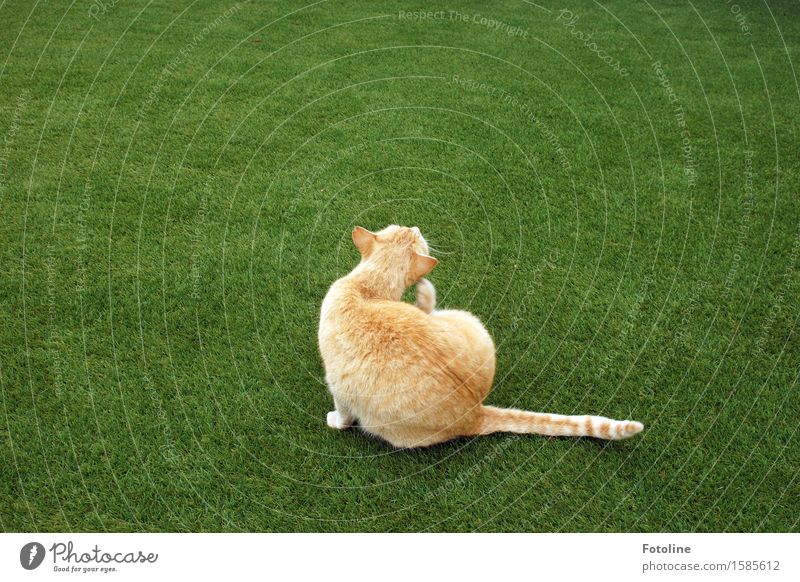 spring cleaning Environment Nature Plant Animal Grass Garden Meadow Pet Cat Pelt 1 Free Beautiful Near Natural Clean Green Orange Cleaning Sit Colour photo