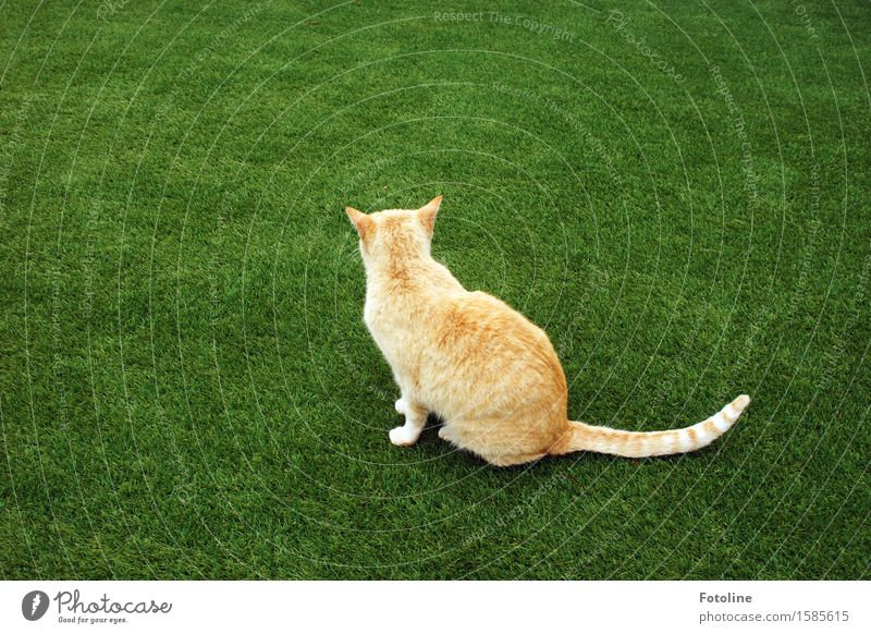 That's when I was turned down. Environment Nature Plant Animal Grass Garden Meadow Pet Cat Pelt 1 Free Bright Beautiful Near Natural Green Orange Sit