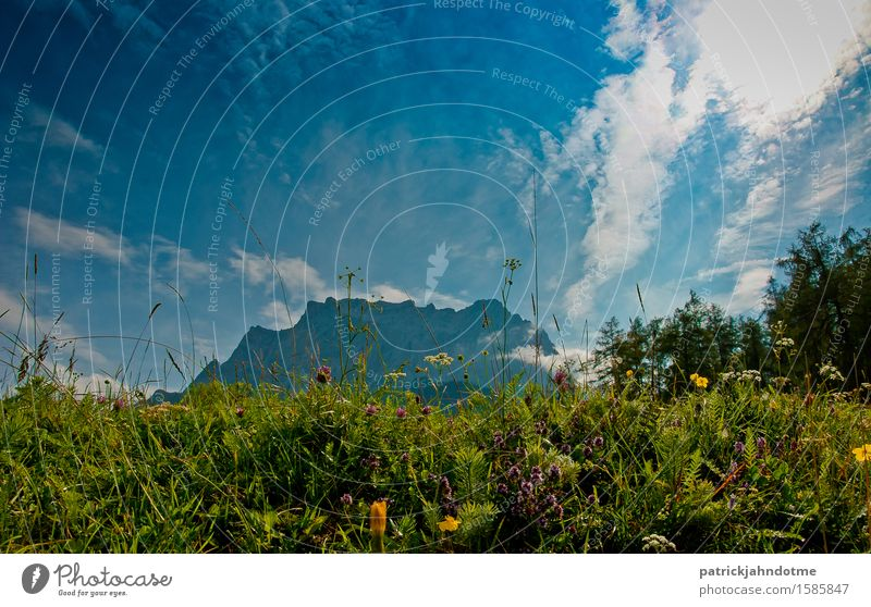 Mountain meadow Austria Environment Nature Landscape Plant Animal Earth Air Clouds Spring Climate Weather Beautiful weather Flower Grass Bushes Leaf Blossom