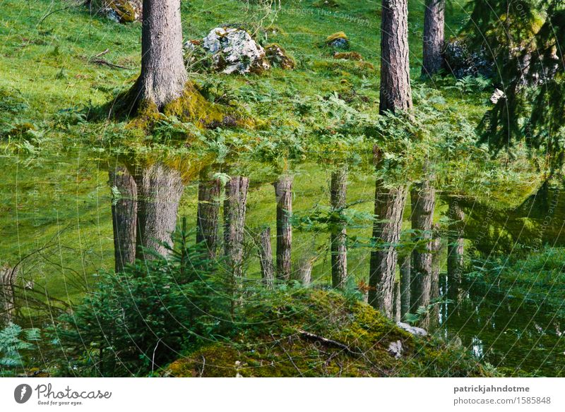 Forest reflection Environment Nature Landscape Plant Animal Earth Water Spring Climate Climate change Tree Grass Moss Meadow Alps Bog Marsh Deserted