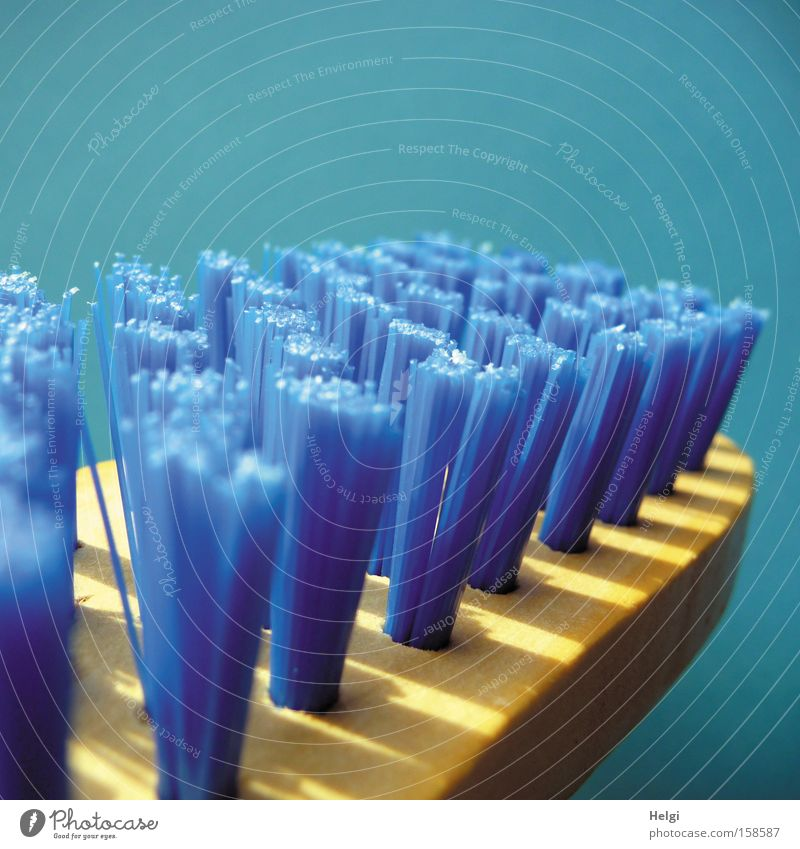 Close-up with blue bristles of a cleaning brush Brush Cleaning Dirty Bristles Wood Blue Household Scratch Services Entertainment swab Helgi