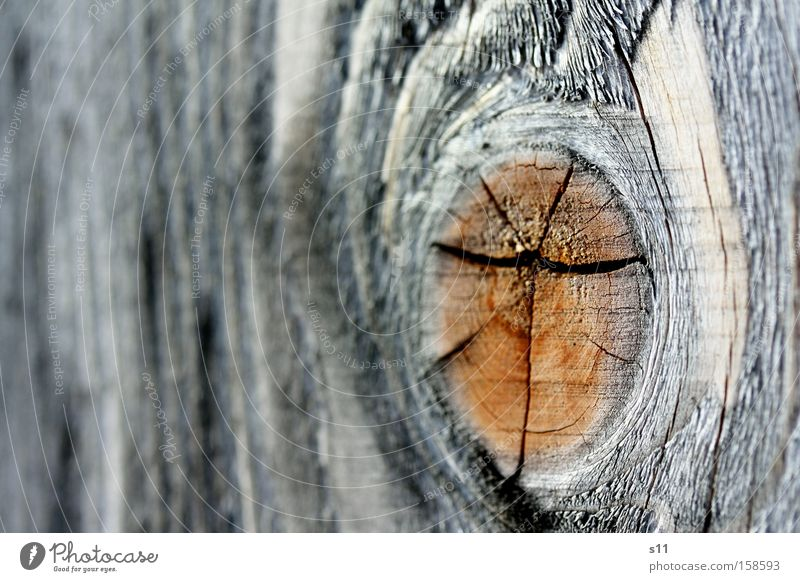 Woody Furniture Robust Crack & Rip & Tear Nature Tree trunk Joiner Macro (Extreme close-up) Brown Annual ring Firewood Close-up Eyes close range increase Heater