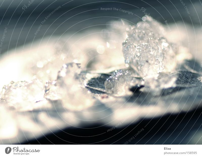 Ephemeral Transience Snow Ice Melt Crystal structure Leaf Nature Winter Grief Distress
