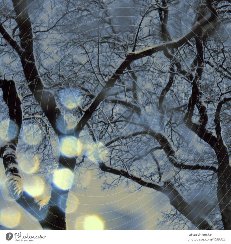 spirits of light Snow Snowfall Snowstorm Snowflake Tree Winter Cold Ice Reflection Branch Hope Light Weather Peace Reflection & Reflection Juttas snail