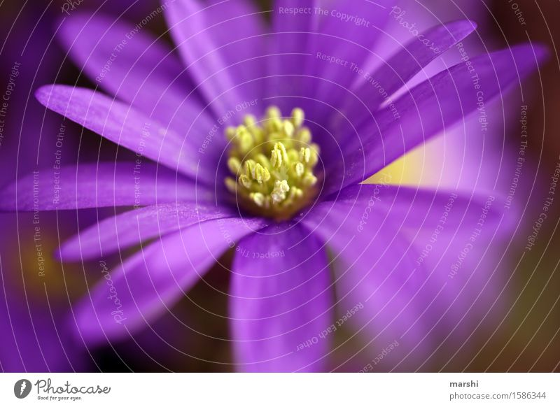 thriving Nature Plant Spring Summer Leaf Blossom Moody Blossom leave Violet Garden Blossoming Beautiful Colour photo Exterior shot Close-up Detail