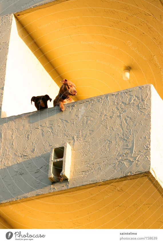 Dogs Ghetto Settlement Balcony Yellow Flat (apartment) Vantage point Far-off places Animal Pet Livestock breeding Abstract Retirement pension