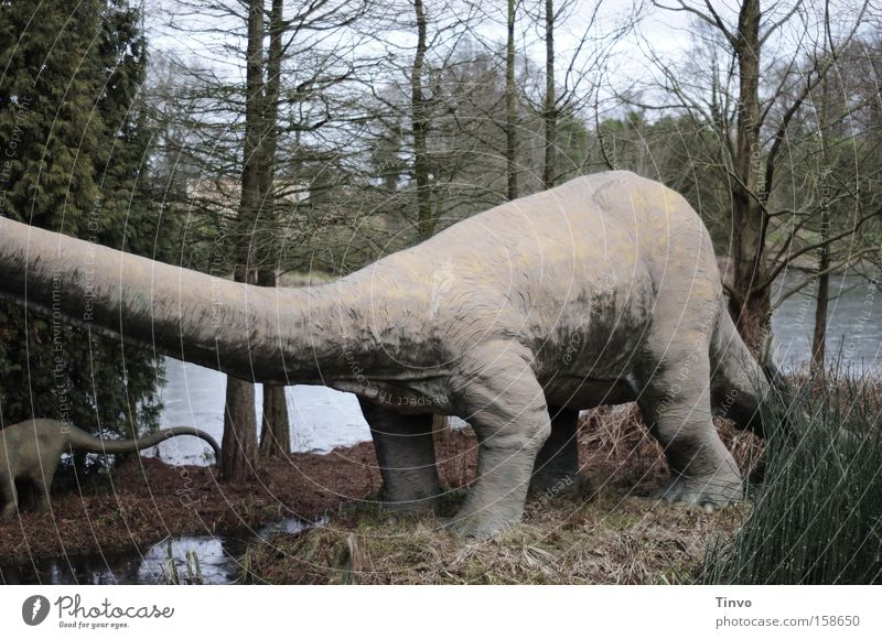 When humans did not yet exist... Dinosaur Herbivore Primitive times Bald-cypress Might Heavy Long-necked Extinct Colossus Transience Brachiosaurus