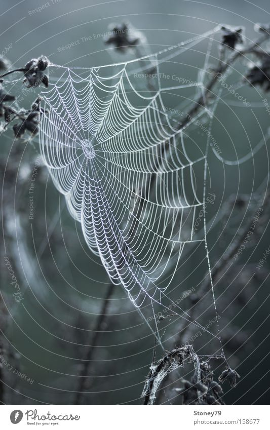 spider's web Nature Plant Drops of water Meadow Net Cold Wet Gloomy Gray Green Calm Spider's web Cobwebby Dew Delicate Colour photo Subdued colour Exterior shot