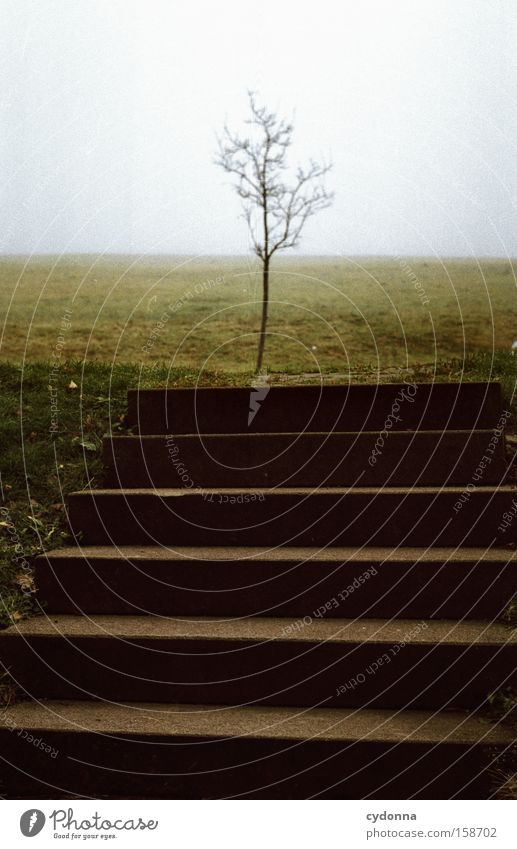 Nature Tree Loneliness Meadow Architecture Concrete Safety Stairs Society Fight Fragile Competition Narrow Habitat
