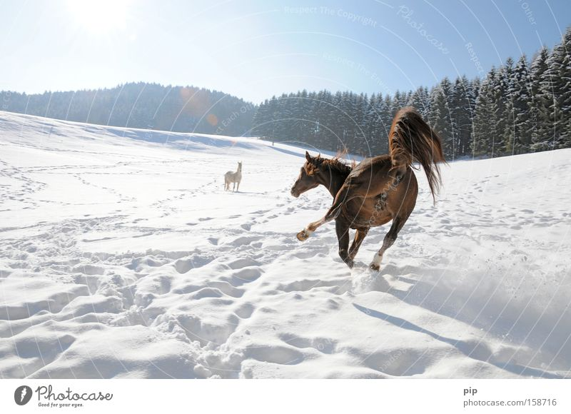 Forest Snow Animal Horse Mammal Smoothness Slip Adversity