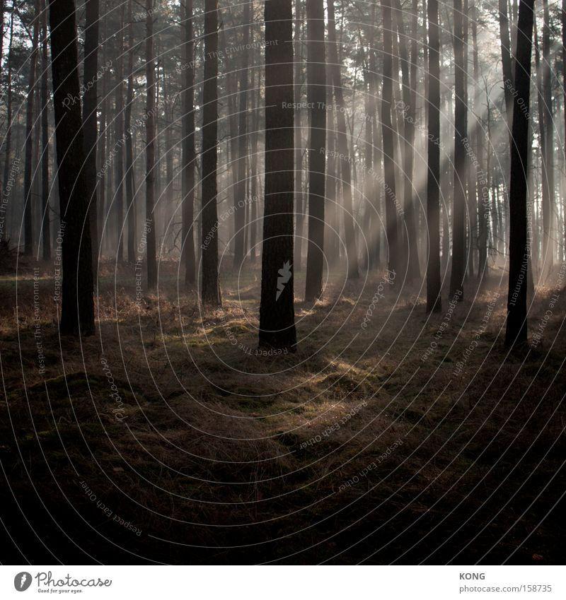 II/I Forest Mystic Light Radiation Brilliant Moody Atmosphere Beam of light Fog Haze Morning Sun Fairy tale Illuminate Peace Celestial bodies and the universe