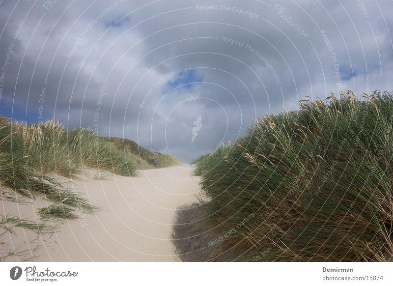 dunes_2 Green Beach dune Water Bright Blue Sky Sand