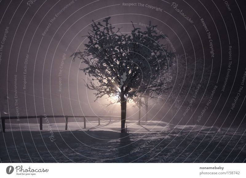 fog tree Tree Fog Night Mystery Mystic Mysterious Winter Snow Dark Loneliness winter night
