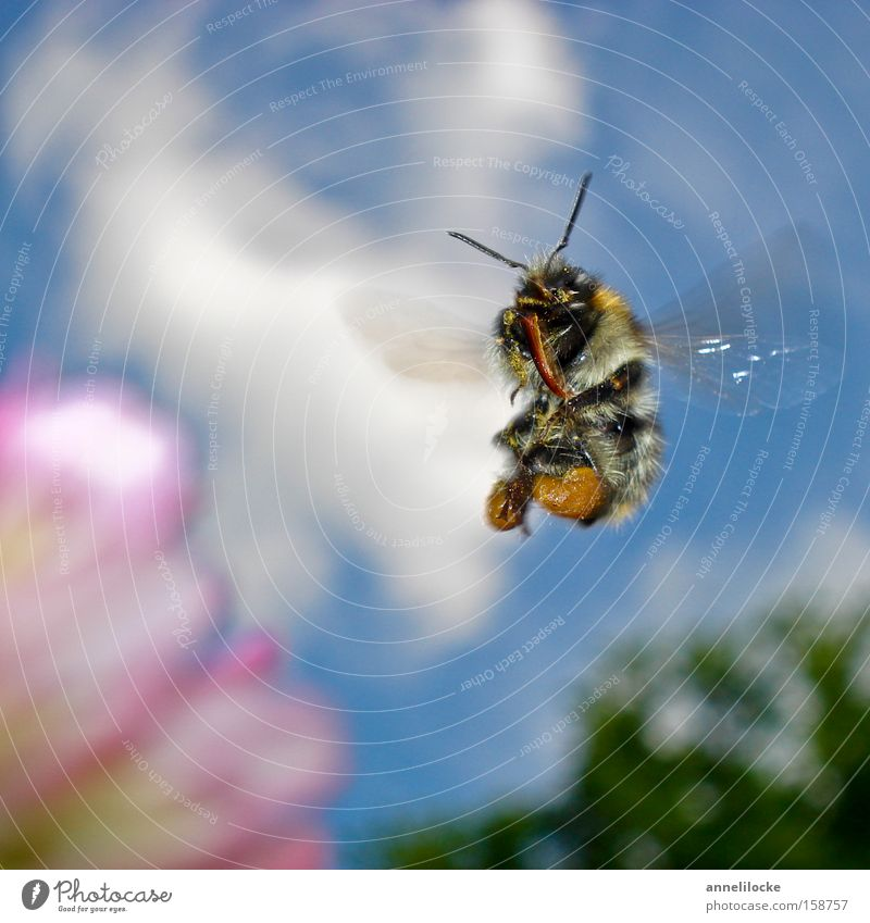Nature Sky Summer Animal Meadow Blossom Spring Park Flying Wing Insect Pelt Bee Wild animal Beautiful weather