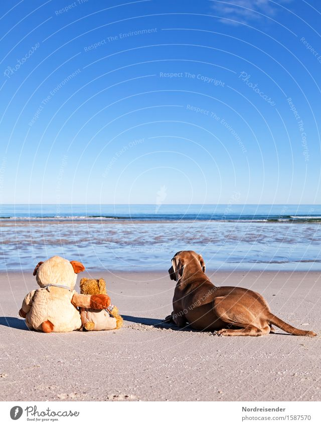 Dog Vacation & Travel Summer Water Sun Ocean Relaxation Joy Beach Far-off places Freedom Sand Together Friendship Beautiful weather Adventure