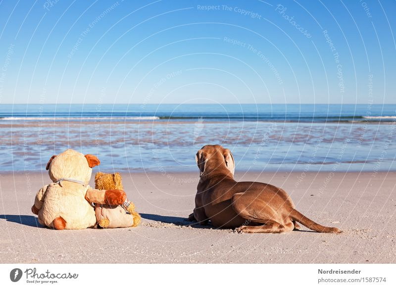 wanderlust Vacation & Travel Freedom Summer vacation Beach Ocean Sand Water Cloudless sky Beautiful weather North Sea Baltic Sea Animal Dog Teddy bear