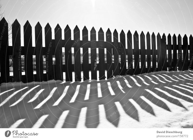 White Sun Winter Black Cold Snow Wood Ice Frost Point Fence Border Parallel Geometry Symmetry Shadow play