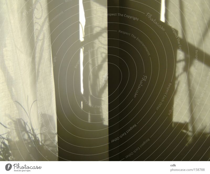 shadowy existence Light and shadow Shadow play Illusion Poetic Plain Transparent Sign Painting and drawing (object) Line Self portrait Wall (building) Drape