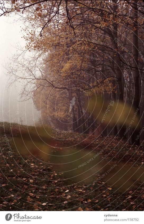 Nature Tree Leaf Far-off places Forest Life Autumn Meadow Landscape Transience Longing Analog Seasons Edge of the forest