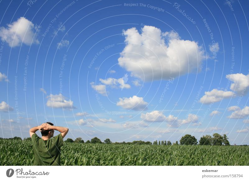 summer air Man Maize field Field Summer Sky Relaxation Far-off places Blue Rural Vacation & Travel Happy Contentment Healthy Americas