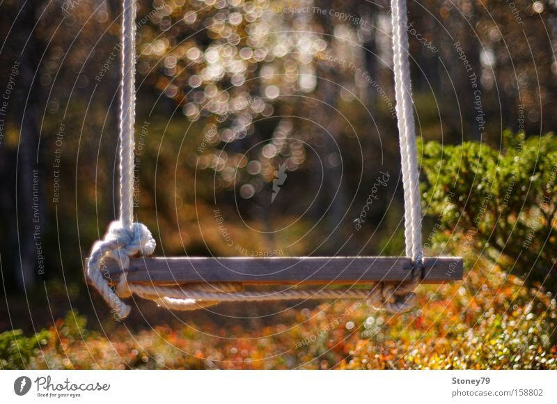 swing Garden Nature Autumn Beautiful weather Warmth Bushes Forest To swing Dream Friendliness Joy Safety (feeling of) Peaceful Longing Loneliness Swing