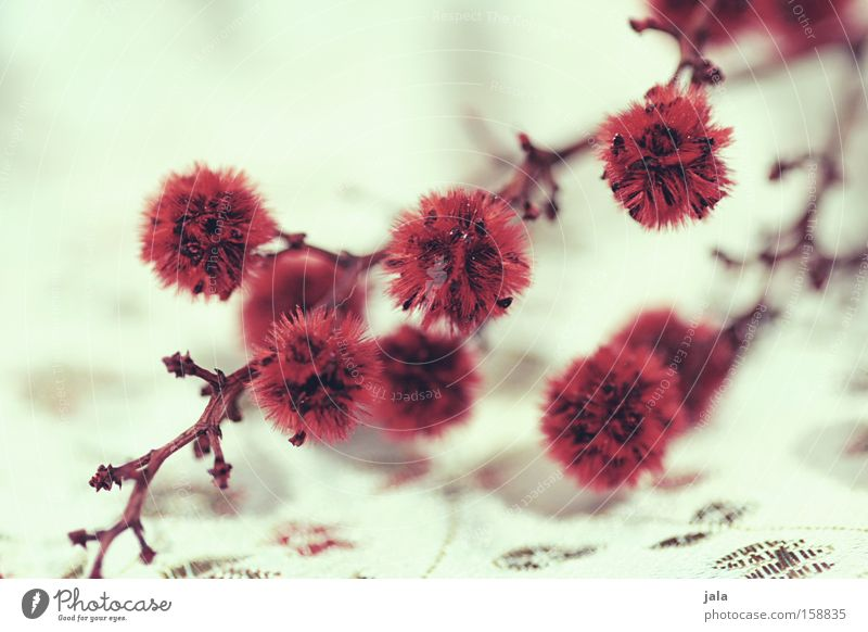 White Flower Plant Red Playing Asia Decoration Cloth Twig Tuft Dried flower