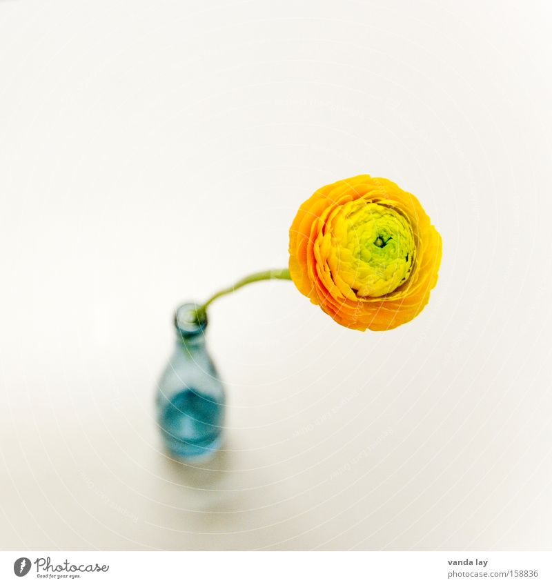Flower Loneliness Love Spring Orange Flat (apartment) Birthday Design Living or residing Decoration Individual Bouquet Jubilee Vase Isolated Image Flower vase