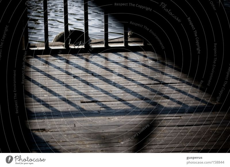 lines Grating Shadow Wooden floor Water Light Pattern Harbour grid